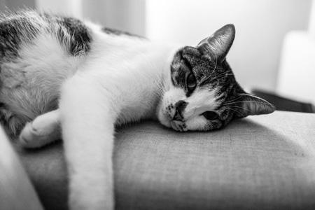 躺在沙发上的猫