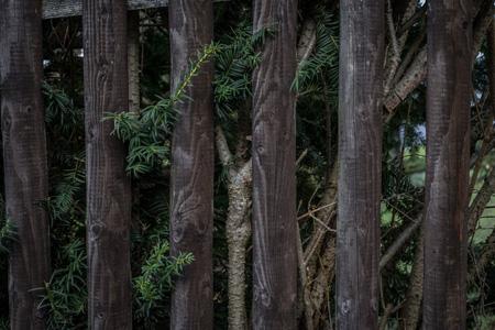 乡村树林背景