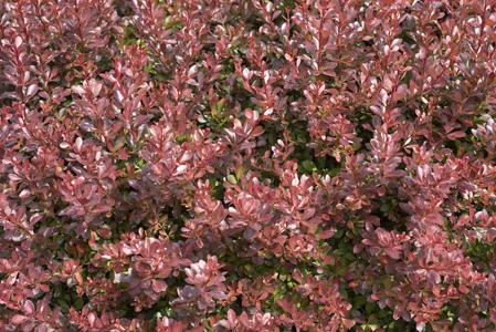 秋季植物摄影