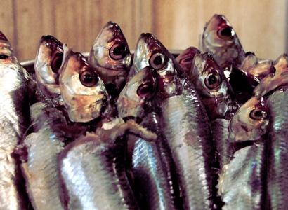 海鲜鱼摄影