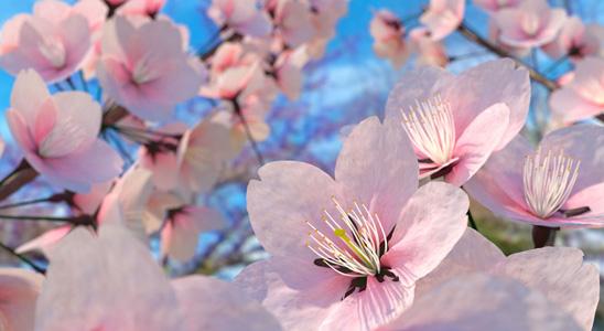 粉色鲜花植物背景
