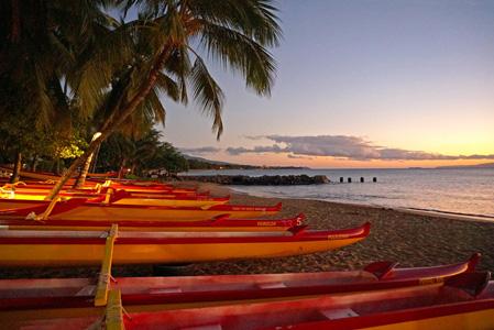 沙滩上的棕树 船