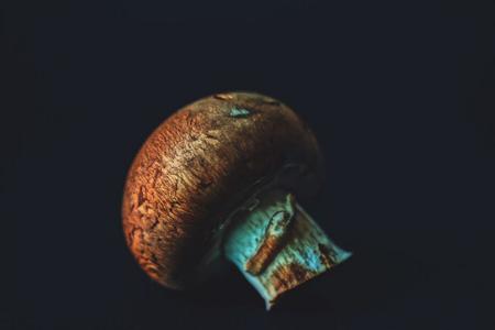 高清香菇摄影
