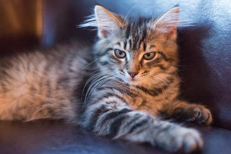 沙发上的猫
