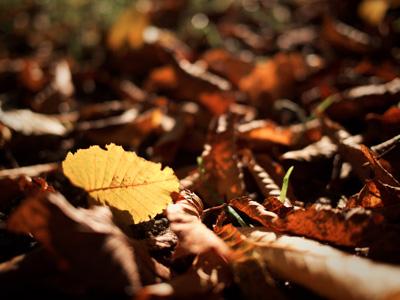 秋季枯叶树叶背景
