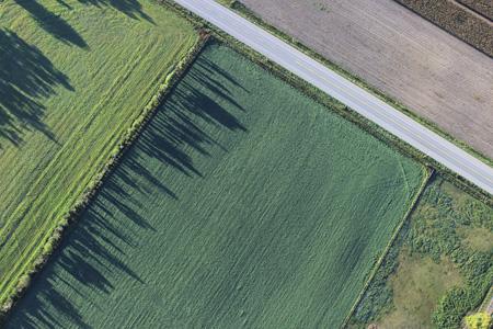绿色农田背景