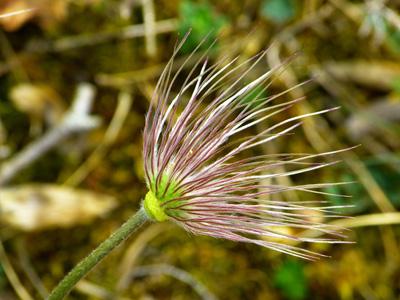 鲜花植物背景