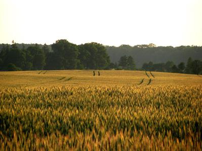 秋季树林与农田背景