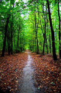 绿色树林道路与枯叶