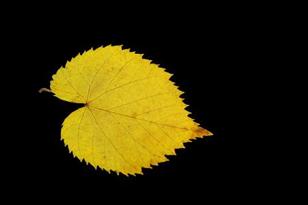 秋季枯叶叶子