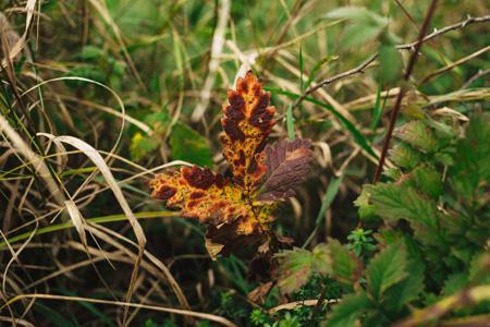 绿色草地上的枯叶