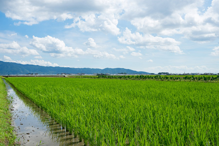 蓝天白云下的农田