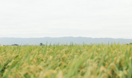 乡村农田背景