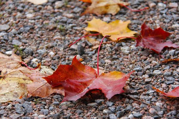 秋季枯叶植物摄影