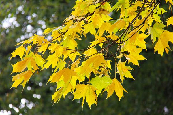 秋季树叶植物摄影