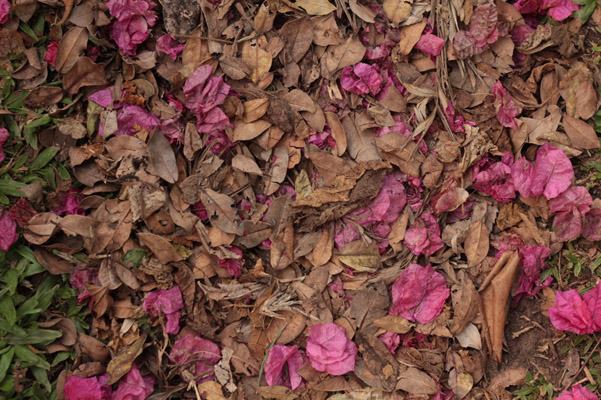 秋季枯叶与花朵