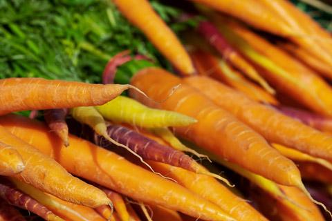 高清萝卜摄影