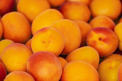 高清杏水果摄影