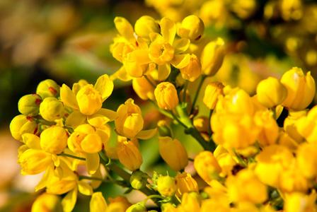 温馨黄色花朵