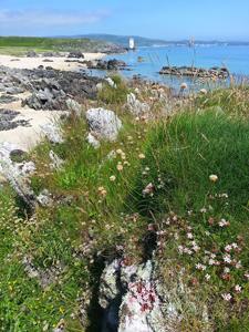 湖水石头野花