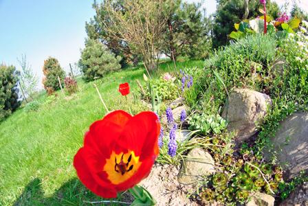 石头和红色花朵