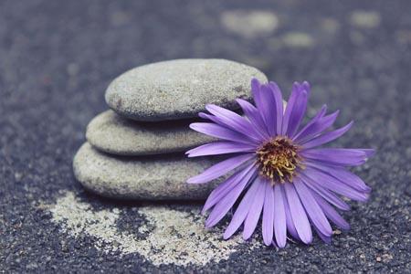 石头与紫色花朵