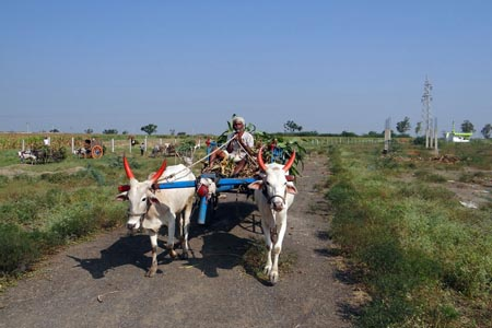 道路上的牛车背景