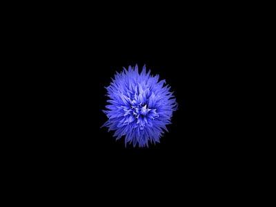 黑色背景与蓝色花朵
