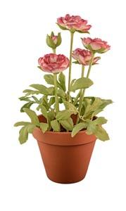 花瓶里的鲜花和绿叶