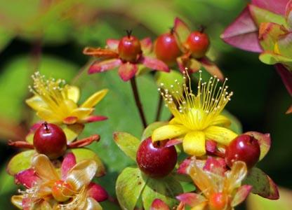 花朵与果子