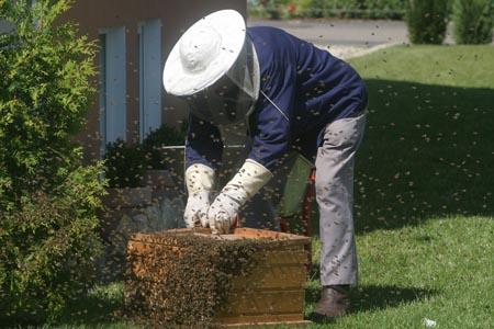 养蜂的人物摄影
