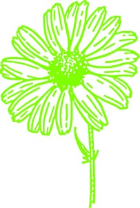 绿色的手绘花朵