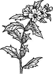 花朵植物设计