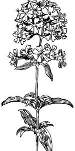 手绘鲜花植物设计