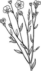 植物叶子鲜花设计