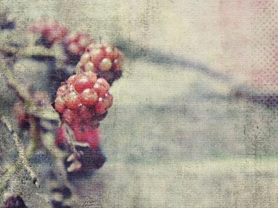 怀旧背景下的树莓
