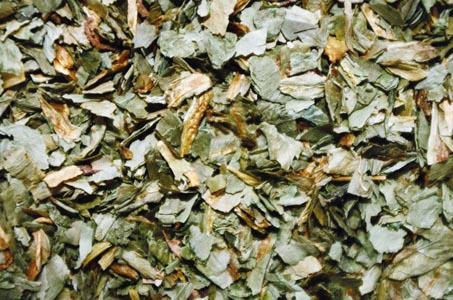 干茶叶摄影