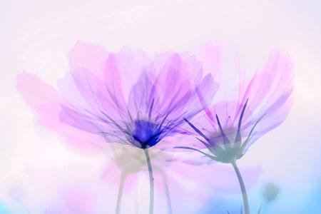 唯美鲜花背景