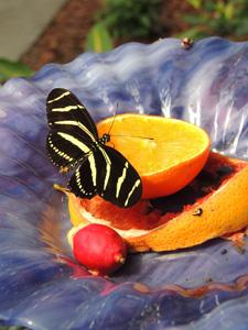 盘子里的水果片与蝴蝶