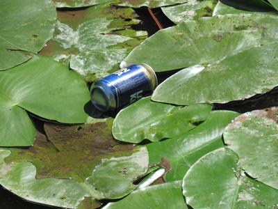 绿色茶叶与易拉罐
