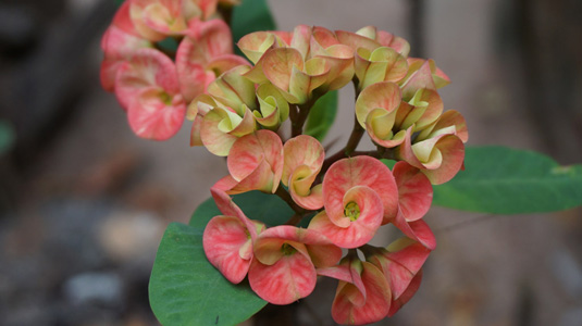 彩色花朵绿叶