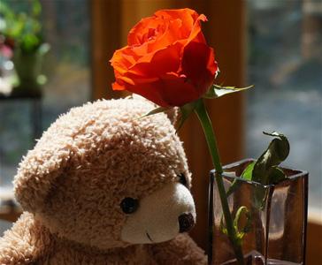 玫瑰花与泰迪熊