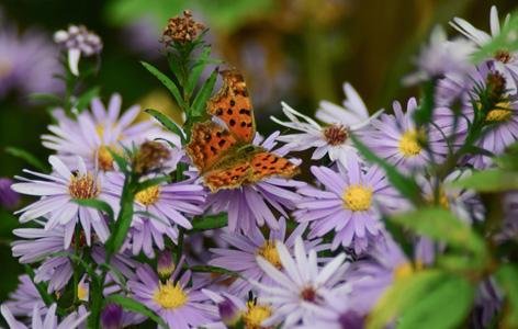 鲜花蝴蝶摄影