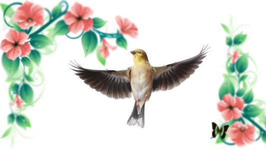 花朵绿叶与鸟