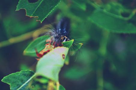 绿叶与动物摄影