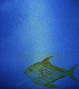 海洋动物背景