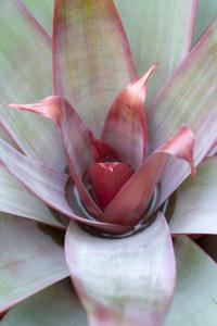 鲜花植物摄影