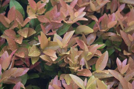 叶子植物摄影