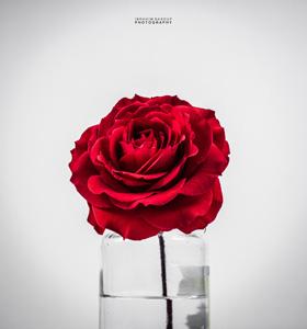 杯子里的玫瑰花