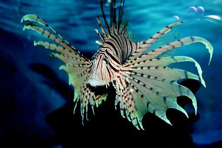 海洋动物摄影